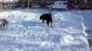 Snow Poops #2 - Black Lab And Dalmatian