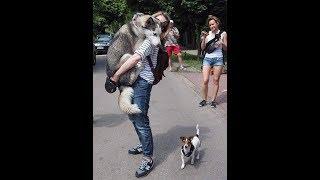 Задумайтесь какая роль Собаки в жизни Человека?