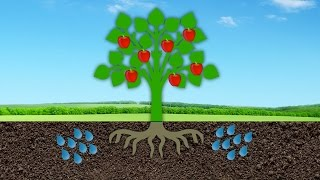 Gambar cover Starting an Orchard: All About Fruit Trees & Taking Soil Samples