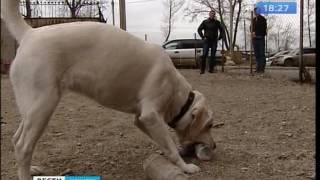 Кто в ответе за тех, кого приручил, или Как выгуливают собак в Иркутске