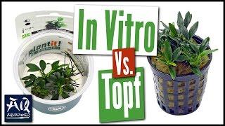 IN VITRO VS. TOPFPFLANZE | AquaOwner