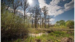 Звуки весеннего леса слушать природу Пение птиц в весеннем лесу слушайте природу онлайн АдыгеяКавказ