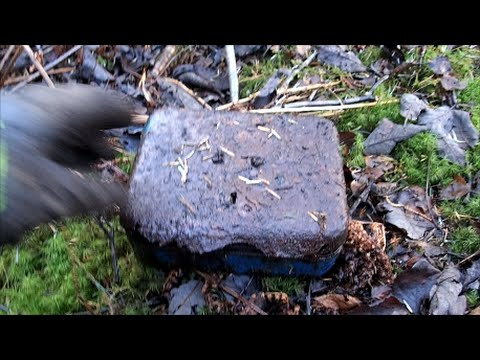 Money box found buried at WW2 location.