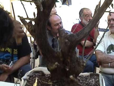 ABV 2006 Demo 1   S  Fernandez   teix  i T  Font   Olivera