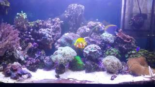 Морской аквариум своими руками 200 л