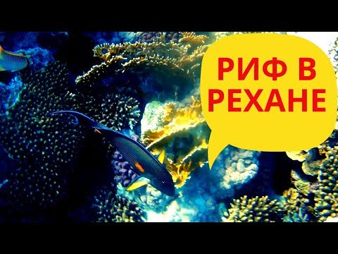 Коралловый риф в отеле Рехана  Rehana Royal Beach Resort риф отеля