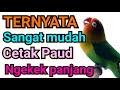 Cara Melatih Lovebird Paud Ngekek Panjang  Mp3 - Mp4 Download