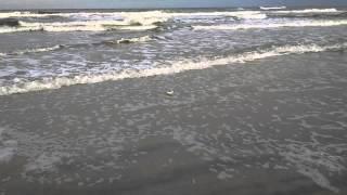 Bird escapes the ocean perils.