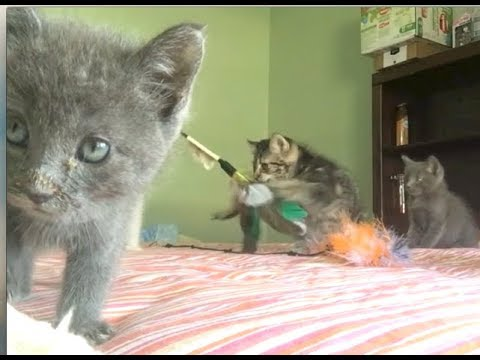 Funniest Kittens Playing With Wand Toys