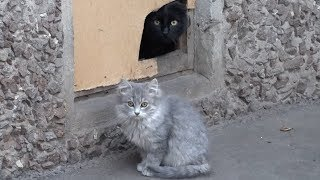 Two kittens with a black cat