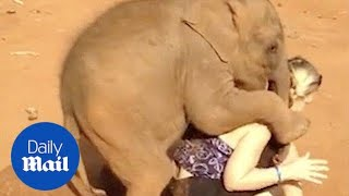 Download Video Baby elephant won't let woman go MP3 3GP MP4