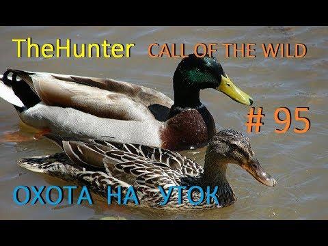 TheHunter Call Of The Wild Охота на уток # 95