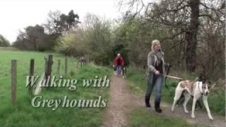 Walking Greyhounds