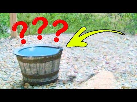 Вода из этой бочки начала куда то пропадать! Чтобы разгадать эту загадку, хозяева установили камеру.