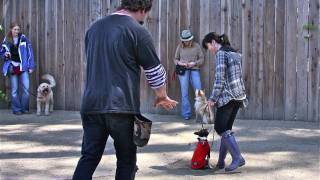 East Bay Dog Circus Class, Bay Area Dog Trainer.