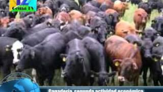 Marz 01 11 Ganadería, segunda actividad económica más importante en Chiapas