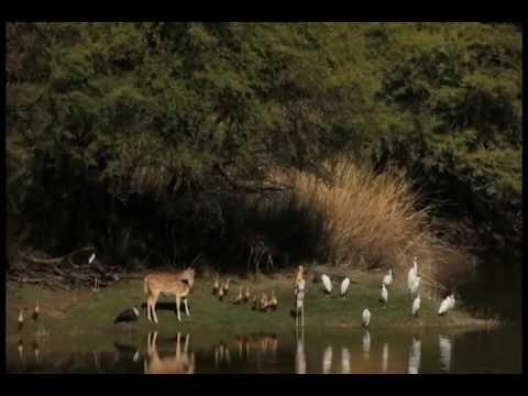 Wilderness & Wildlife Conservation