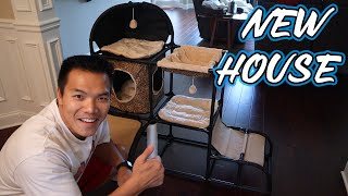 Building our big Maine Coon Cat a new Tree House | A Day in the life of a Cat Dad | John Le AMWF