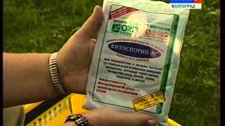видео От чего зависит плодородие почвы: как проводить уход за грунтом на даче