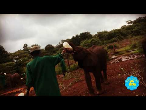 Kannada Travel VLOG | David Sheldrick Elephant Orphanage | Nairobi, Kenya |