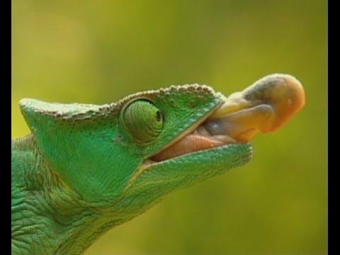Part 1 Madagascar Island Ark - Before It's Too Late | Storyteller Media