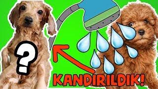 KANDIRILDIK! Yeni Köpeğimiz ilk kez Banyo Yaptı Harmony Yüzdü Evcil Köpek Bakımı! Bidünya Oyuncak 🦄