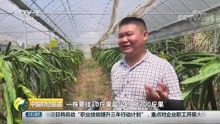 [中国财经报道]江西:多地农作物受灾 采取多种措施应对旱情  CCTV财经