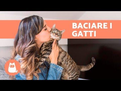 Ai gatti piacciono i baci? 😘😽