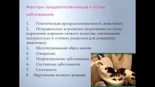 Мочекаменная болезнь домашних животных  Галина Куковица
