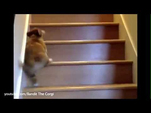 puppies learn to climb up and down the stairs  youtube
