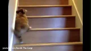 Puppies Learn To Climb Up And Down The Stairs