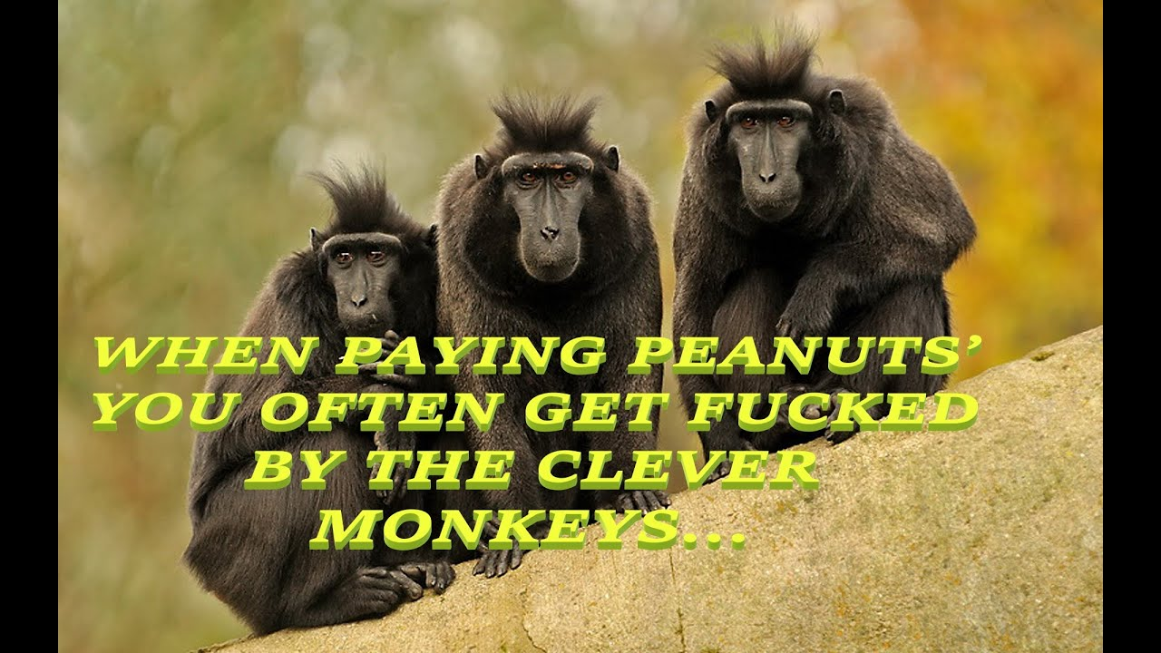 PiMtF [E 077] WHEN PAYING PEANUTS' YOU OFTEN GET FUCKED BY THE CLEVER MONKEYS…