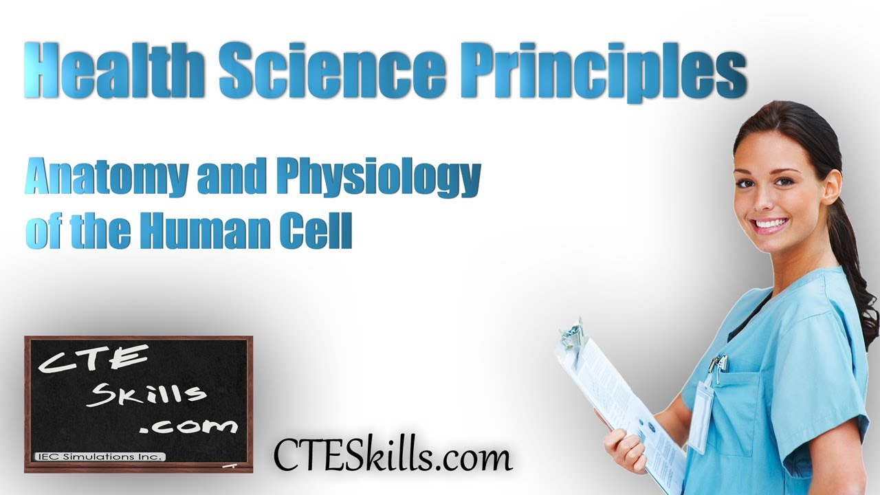 Anatomy And Physiology Of The Human Cell Youtube
