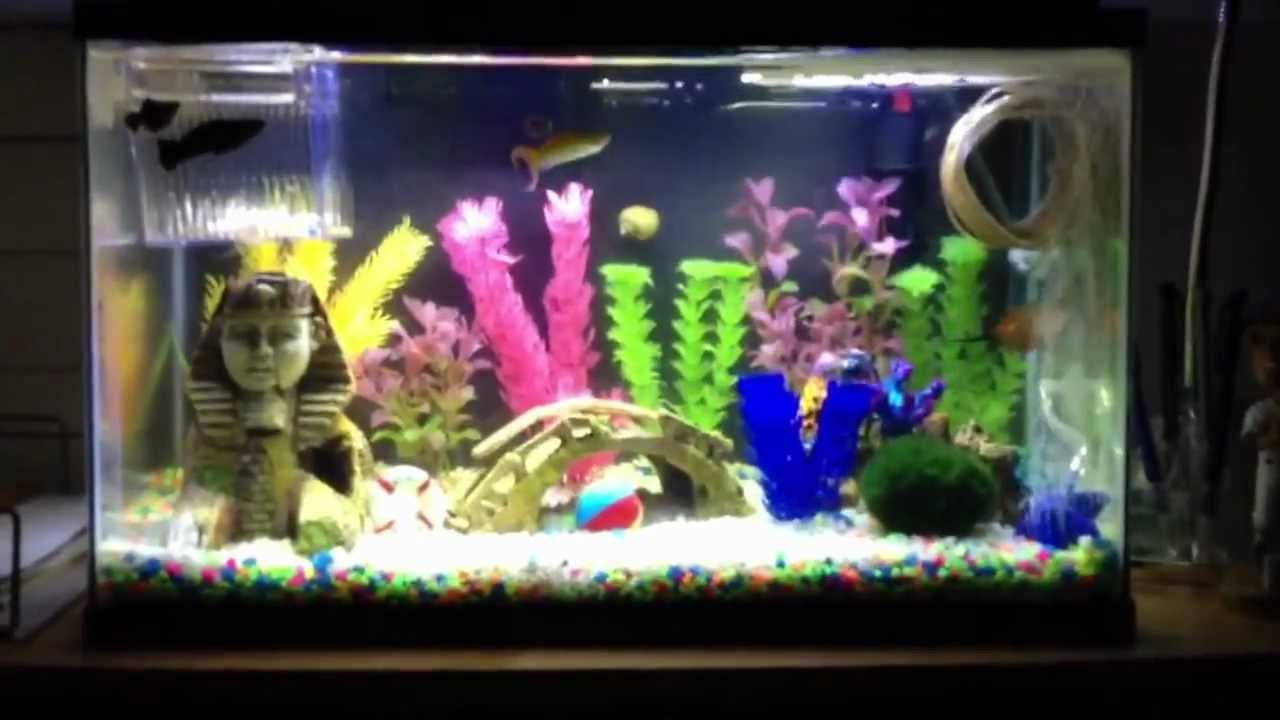 10 gallon aquarium with marineland submersible led lighting youtube mozeypictures Image collections
