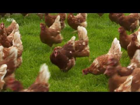 Wie Gut Sind Unsere Eier NDR Das Beste Am Norden