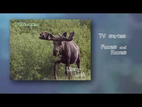 LibraryLook: Yellowstone - Moose Adventures
