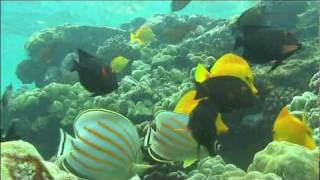 NatureVision TV Presents our Underwater Paradise Preview