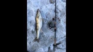 Сумасшедшая рыбалка в Химках, затмила легендарное Чулково. Клёва такого я даже не ожидал..