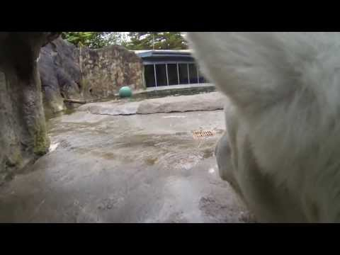 Aw: The World Through A Polar Bear's Eyes [Video]