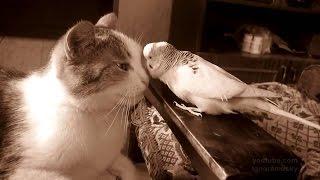 Дружба животных  Кот и попугай