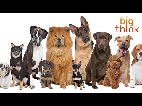Bill Nye Talks Dogs and Explores the Lessons of Canine Evolution