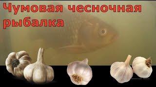 Риболовля на ставках Знам'янки