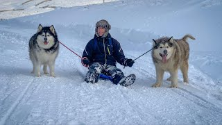 SLEDDING WITH SLED DOGS
