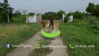 Introduction: Tantai Permaculture Farm in Khao Yai