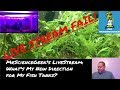 Live Stream Monday: My New Direction for My Fish Tanks. Where am I Going?