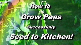 Everything You Need to Know About Growing Peas - Seed to Kitchen