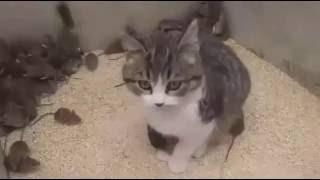 Рославль Кот Мышей не Ест