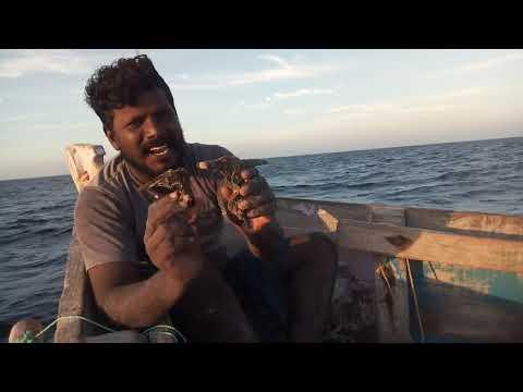 அறிய வகை உயிரினம் / rare variety of organism in the sea