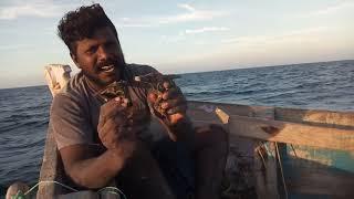 அறிய வகை உயிரினம் / rare variety of organism in the sea thumbnail