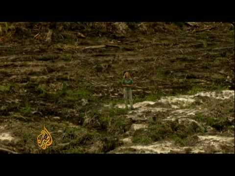Firm accused of illegal deforestation in Indonesia